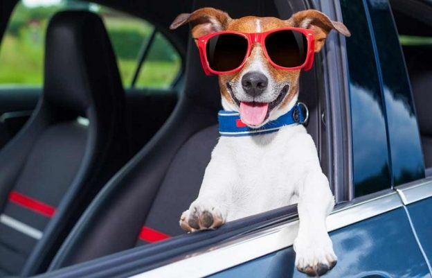 Car hire in Javea with Pets